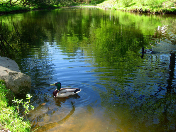 Pond stratification, or how a sick pond can become healthy