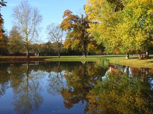 park_pond_trees